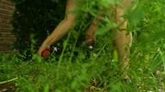 Planting weeding cut garden gardening Stock Footage