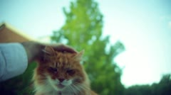Playful cat playing kitty cat Stock Footage