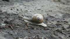 Snail crawling on the ground, time lapse Stock Footage