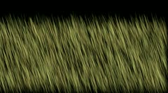 Wind breeze blow grassland,meadow prairie pasture wheat barley background. Stock Footage