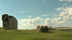 Sheep and goats in a clean environment Stock Footage