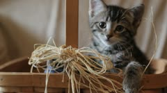 Stock Footage - Young Kitten sitting in a country basket yawns Stock Footage
