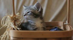 Stock Footage - Young Kitten in Country Basket with balls of cloth Stock Footage