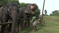 Feeding of a working elephant Stock Footage