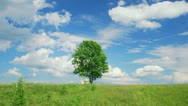 Single lone tree Stock Footage