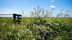 Dutch landscape with grass Stock Footage