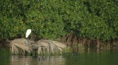 Lagoon natural park bird reserve mexico Stock Footage