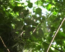 Spidersweb in english wood Stock Footage