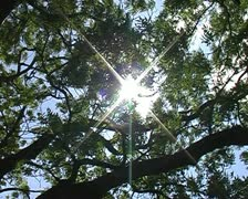 Sun shines through branches blowing in the wind SD Stock Footage