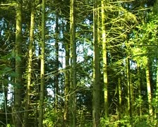 Time-lapse woods light ripples through trees SD Stock Footage