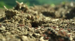 Ant colony (dealing with the intruder) _5 Stock Footage