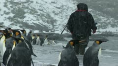 South Georgia: king penguin crowd 8 Stock Footage