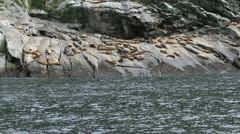 Seals from moving boat handheld P HD 1904 Stock Footage