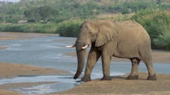 Elephant crossing river Stock Footage