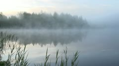 Early summer morning at a lake Stock Footage