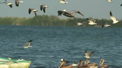 Bird watching mexico Stock Footage