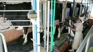 Stock Video Footage of Modern Milking Parlor