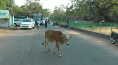 Cow crossing the road in India Stock Footage