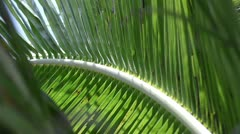 Stock video footage jungle palm leaves Stock Footage