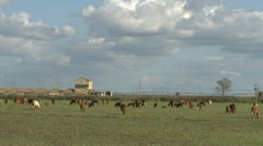 Cows grazing farm meadow time lapse Stock Footage