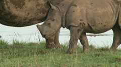 Close up of white rhino with a baby Stock Footage