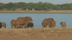 Elephant drinking near a wildlife lodge Stock Footage