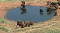 Elephants in a lodge waterhole 1 Stock Footage