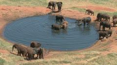 Elephants in a lodge waterhole 3 Stock Footage