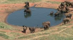 Elephants in a lodge waterhole Stock Footage