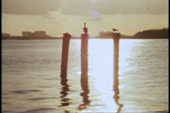 Miami Beach, sunset, sea, skyline, three poles in sea, pelican perched atop Stock Footage