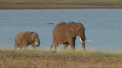 Elephants mother and baby walking along a lake Stock Footage