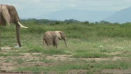 Elephants mother helping her baby and pushing away another Stock Footage