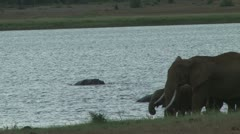 Hipos confront elephants in a lake Stock Footage