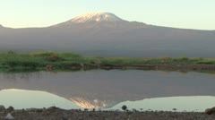 Reflection of kilimanjaro in a small pond Stock Footage