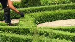 Measuring boxwood shrubs HD Stock Footage