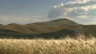 Golden wheat field blowing in the wind Stock Footage