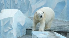 Polar bear in zoo Stock Footage