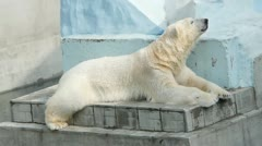 Polar bear in zoo Stock Footage