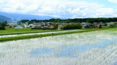 Rice field. Stock Footage