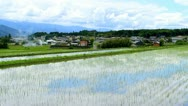 Stock Video Footage of Rice field.