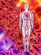 human circulatory system, artwork - stock illustration