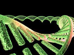 Stock Illustration of dna molecule, computer artwork