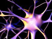 Nerve cells, computer artwork Stock Illustration