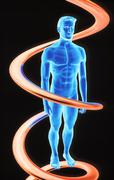 Stock Illustration of dna and human