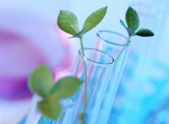 Plant biotechnology Stock Photos