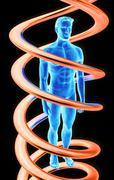 Dna and human Stock Illustration
