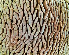 intestinal lining, sem - stock photo