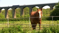 Horse in field under Pontcysyllte aqueduct, Wales Stock Footage