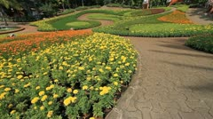 Flower garden, ornamental. Stock Footage