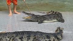 Crocodile. Stock Footage